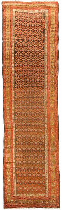 ANT174474 Persian Malayer